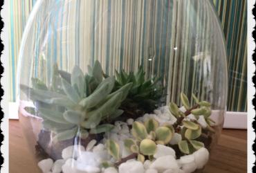 Vida Verde (OTV) – Como montar um arranjo charmoso com suculentas