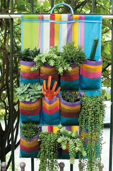 Sapateira plantas